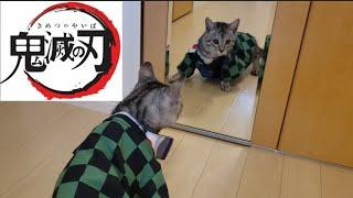 劇場版「鬼滅の刃」 アニメ 竈門炭治郎が子猫になった姿がこちら。鏡と睨めっこする子猫が可愛いすぎる!