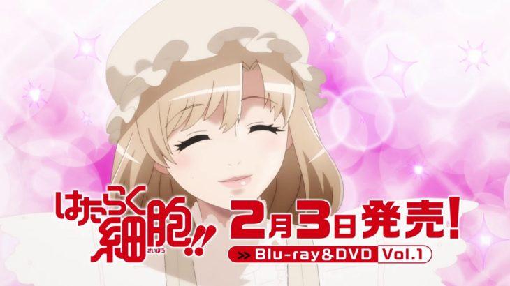 「はたらく細胞!!」Blu-ray&DVD 2月3日発売!