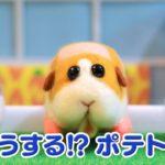 TVアニメ「PUI PUIモルカー」第1話 渋滞はだれのせい? 予告