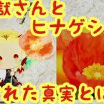 【鬼滅の刃】煉獄さんとヒナゲシの花に隠された真実
