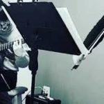 #鬼滅の刃#紅蓮華#violin and guitar#shorts TVアニメ「鬼滅の刃」より「紅蓮華」をヴァイオリンとギターで弾いてみた。