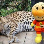 アンパンマン おもちゃアニメ 動物園にいってみよう!ヒツジさんにエサをあげるよ! トイキッズ