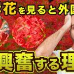 【海外の反応】外国人「鬼滅の刃、アニメに彼岸花が出てくる謎がついに解けた!」衝撃のその理由!!